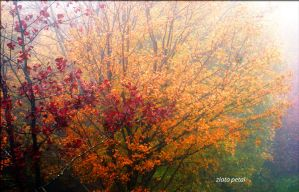 autumn in full colour by Zlata-Petal