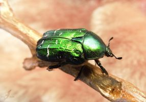 Green bug by AlviaAlcedo