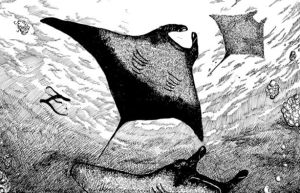 Manta Ray Pen and Ink by TheAmericanDream