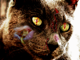 Harmed Cat by maurice