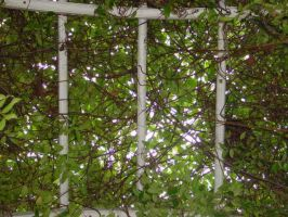 arbour vines by guesshimself