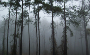oLDE mISTY fORREST by Mirrormere