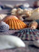 shells by EiQAH
