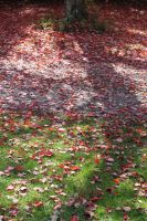 fall leaves by taevans