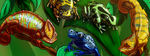 CM - Chameleons and Frogs banner by LadyRosse