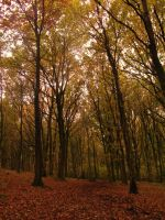 Autumn forest 3 by PhilsPictures