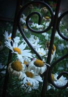 Fading flowers, fading heart by blessedchild