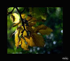 leaves by rdalpes