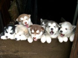 Puppies by NiveousLamia