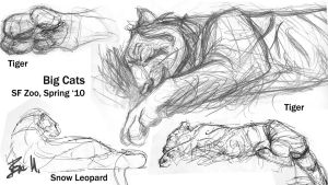 Animal Sketchbook: Big Cats 02 by 89ravenclaw