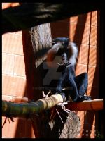 Lion Tailed Macaque by Wyatt-03