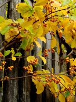 Touch of Fall VIII by TriciaStucenski