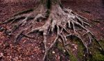Deep roots by Nimiel-Dei