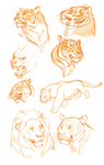Tiger practice sketches by Drkav