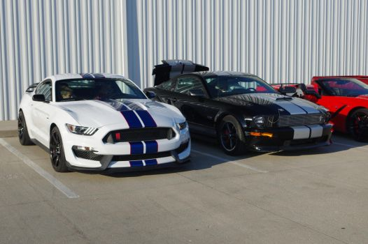 Meeting of the Mustangs by Carsiano