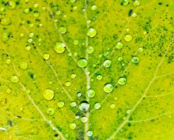 Leaf close up resubmit by emerica84