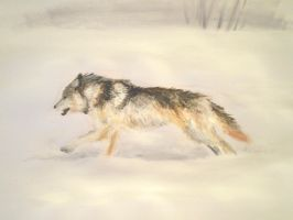 Running Wolf by Silverbirch