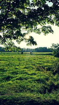 Fields of Green by searchmysoulforfire