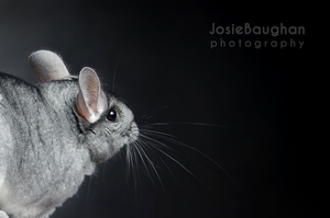 Introducing Blue by JBphotographer