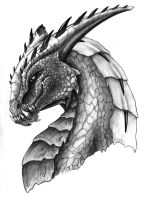 Portrait of a Dragon by sketchbookcreations
