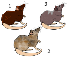 Rat Adoptables -SOLD- by jesspotter