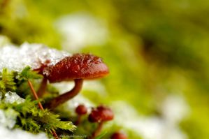 Frozen fungi by kayaksailor