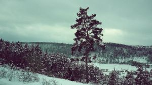 its always cold by lampifisch