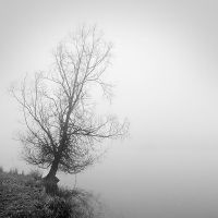 Foggy 4 by laurentdudot