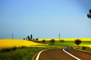 Yellow land by cristilaceanu