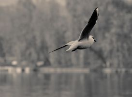 ..auTumN. ..FLighT... by Anotheroutsider