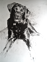 Dog Drawing by stardust12345