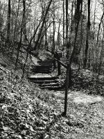 forest stairway by ribcage-menagerie