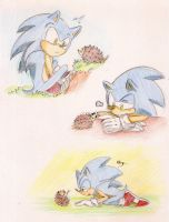 Sonic meets the hedgehog by esbelle