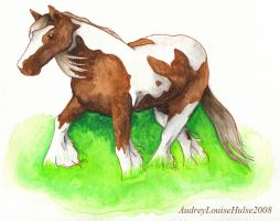 Gypsy Vanner by Audriana