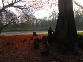 Taxodium by ImperataLexinor