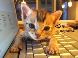 the new keybourd kitty by RockySmith
