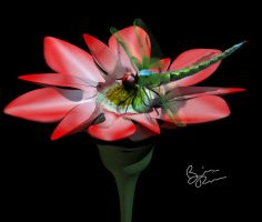 dragonfly on flower by rio3d