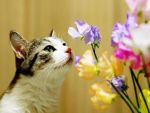Cat and Flowers by NicoleNi