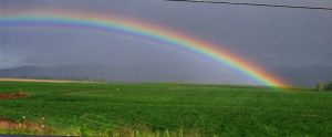 Rainbow in Field1 by BethLeda