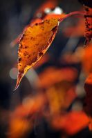 Flames of Autumn by InLightImagery