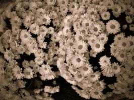 flowers 2 by lalliphotography
