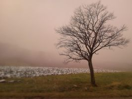 Lonely tree by paully93