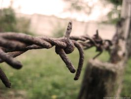 barbed wire by me-inside515