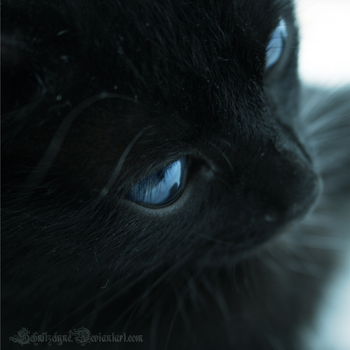 Blue Eyes by ElyneNoir