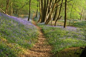 Flowered woods by gallwen