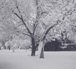 Snowy Day .:Picture Edit:. by FloralFantasy