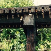 Trestle by The-Feral-Child