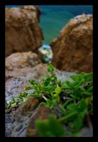 Cliff Hanging Leaves by WiDoWm4k3r