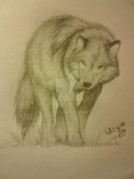 Wolf by IAWE