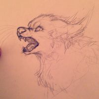 Sketch- Snarl by cattuccino